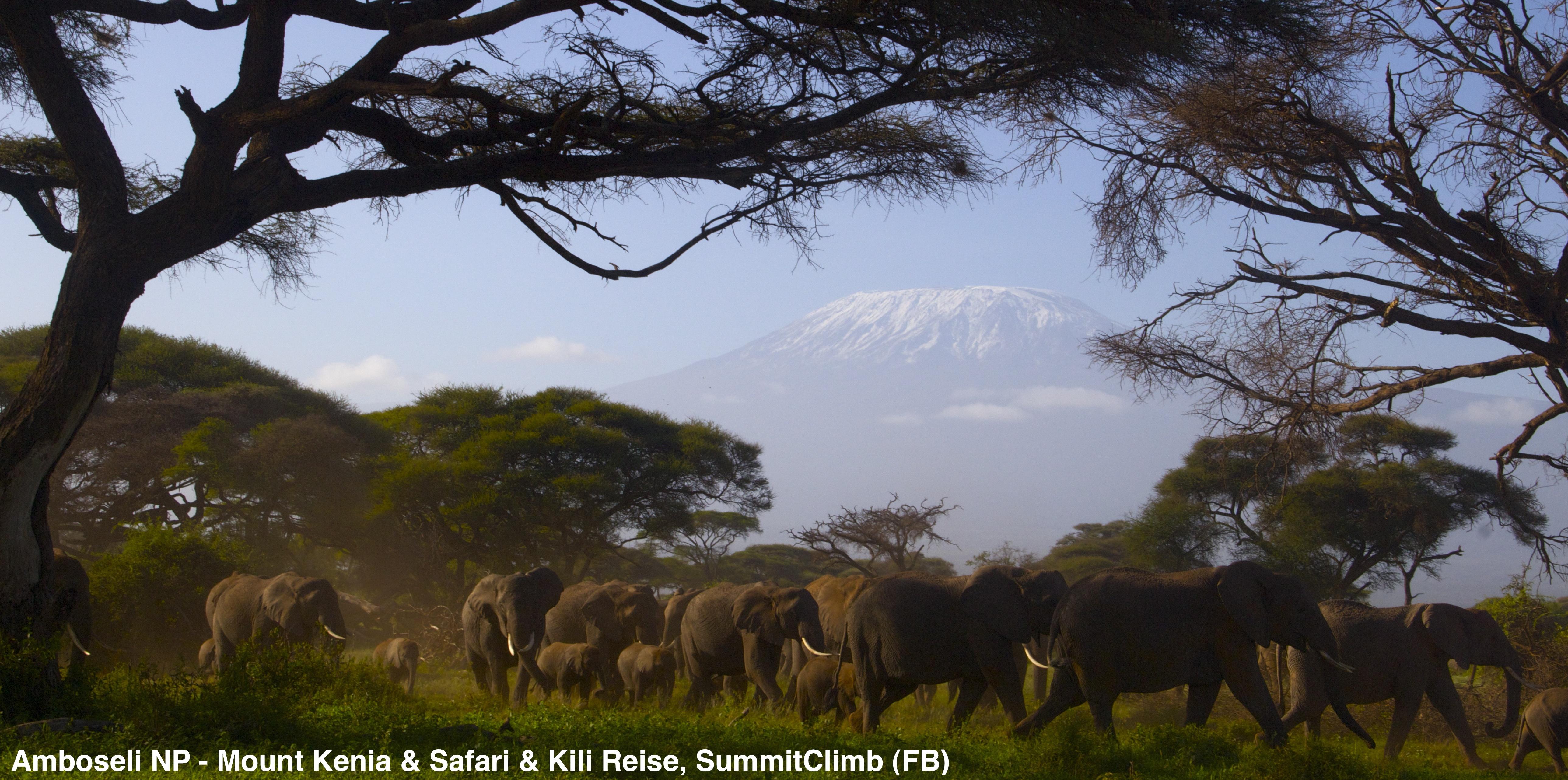 Kilimandscharo Elefanten auf Safari