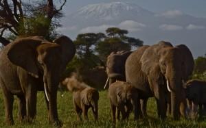 SummitClimb Amboseli- Photo Felix Berg 1