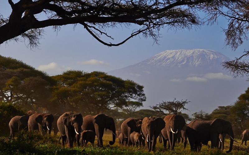 Afrika Safari, Amboseli Elefanten und Kilimanjaro