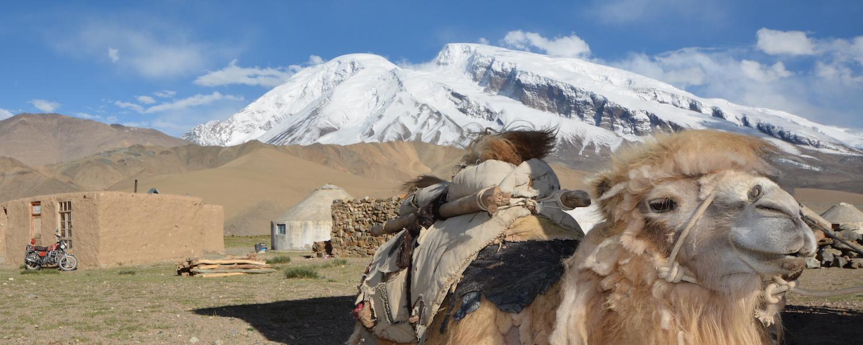 Kamel vor dem Muztagh Ata