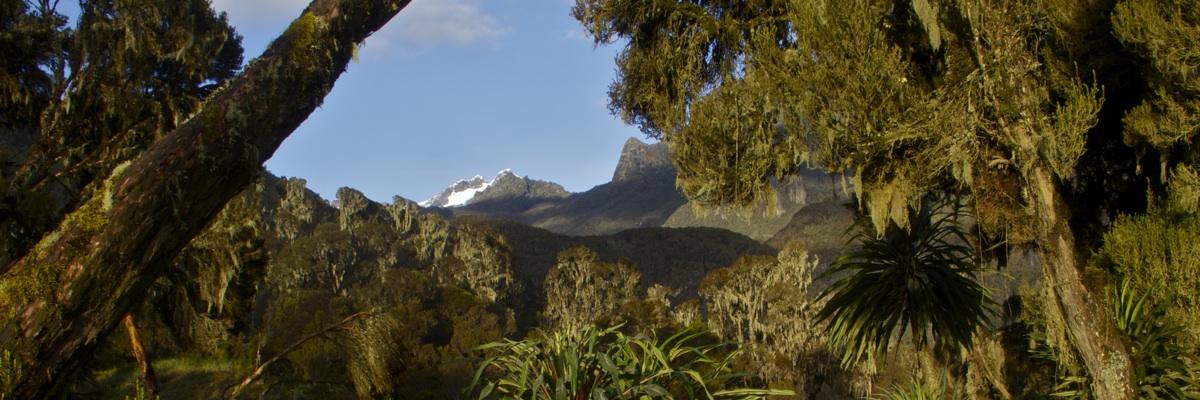 Blick auf den Mount Stanley von der John Matte Hut, Bujuku Fluss - Ruwenzori, Uganda (FB)