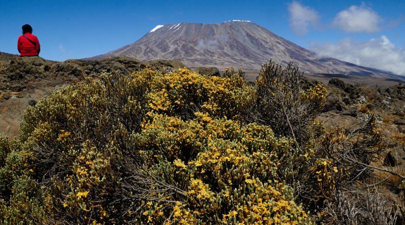 Trekking am Kilimanjaro, Blumen.