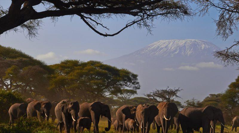 Kilimanjaro Elefants